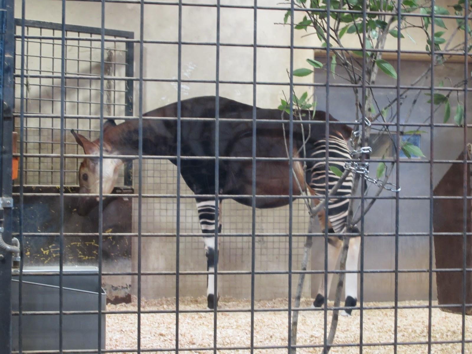 動物園の同ブル