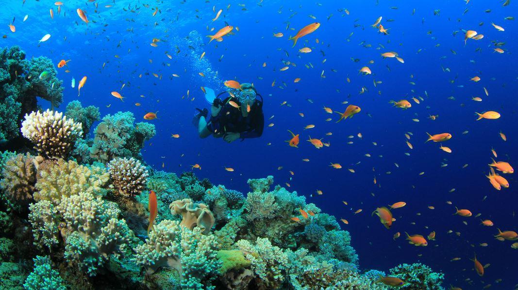 綺麗な海の世界