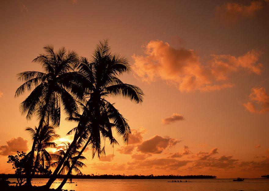 ココナッツオイル椰子の木