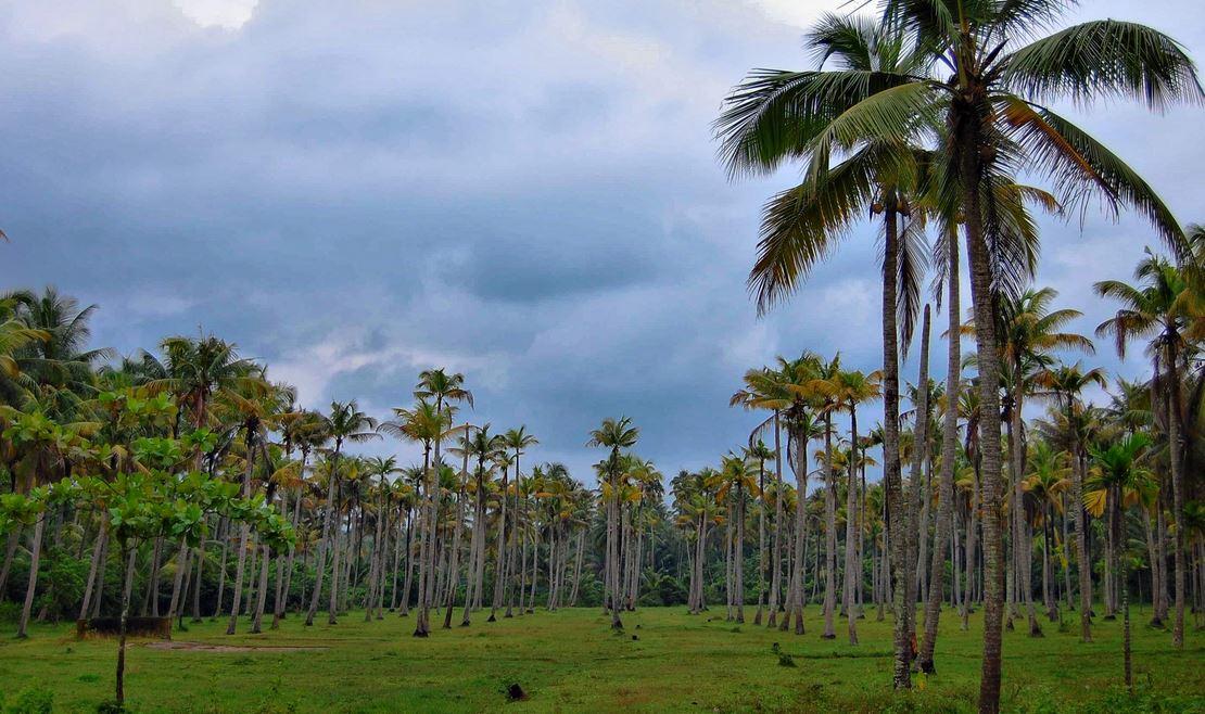 タイのココナッツオイル